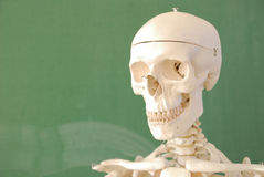 Skeleton. Head shoot, in front of elementary school classroom table Stock Image
