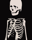 Skeleton. A fully scalable vector illustration of a human Skeleton vector illustration