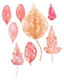 Skeleton Abschluss des roten trockenen Blattes Makrooben Lizenzfreies Stockfoto
