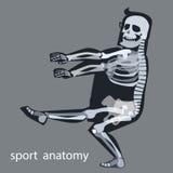 Skeleton anatomy sport male gymnastics. The human skeleton during sports Royalty Free Stock Photos
