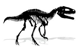 Dinosaur skeleton. Skeleton of ancient big dinosaur Stock Images