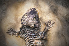 Skeleton of ancient extinct animal. Fossil of some reptile found by scientist in nature stock images