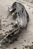 Skeleton of an ancient ship after crash Royalty Free Stock Photography