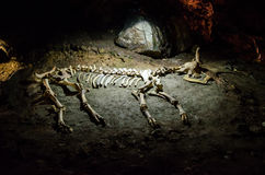 Skeleton of animal in the cave Emine Bair Khosar. Crimea. Royalty Free Stock Images