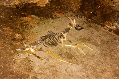 Skeleton of animal in the cave. Stock Photo