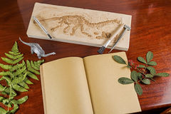 Skeleton and archaeological tools. Stock Image