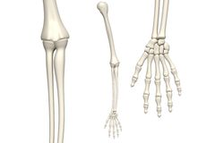 Skeleton arm Stock Photos