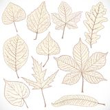Skeleton autumn leaves of different trees Stock Photo