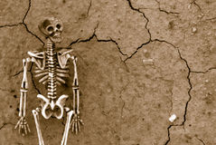 Skeleton Background Stock Image