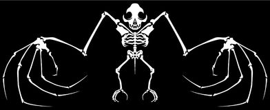 Skeleton Bat. Ghosts Halloween cartoon character white silhouette, vector illustration, horizontal, isolated Stock Photography