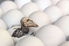 Skeleton of a bird. Royalty Free Stock Image