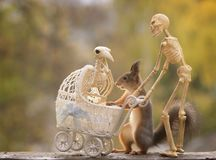 Skeleton bird and red squirrel with stroller and a skeleton Royalty Free Stock Photography