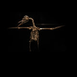 Skeleton birds in flight on black background Stock Images