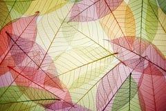Skeleton Blätter lizenzfreie stockfotografie
