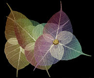 Skeleton Blätter stockfoto