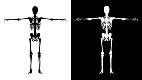Skeleton black - white. Skeleton white isolated on black and black  isolated on white Stock Photo