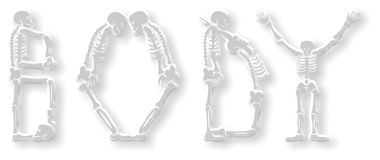Skeleton Body. The word 'body' made of different skeleton designs, isolated on a white background Royalty Free Stock Photography