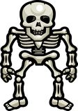 Skeleton Bones. A human skeleton standing upright Royalty Free Stock Photography