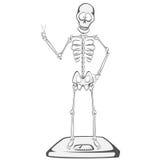 Skeleton Buddy Royalty Free Stock Image