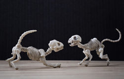 Skeleton cat and dog Stock Images