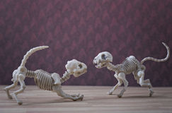 Skeleton cat and dog Royalty Free Stock Photography
