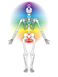 Skeleton with Chakras. Illustration of skeleton with seven chakras Vector Illustration