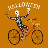 Skeleton on city bicycle. Vector illustration with skeleton on city bicycle with pumpkin in basket. Halloween illustration Royalty Free Stock Image