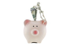 Skeleton climbing on pink piggy bank with American dollar money Royalty Free Stock Image