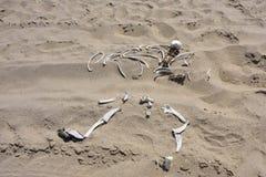 Skeleton coast, Namibia Stock Image