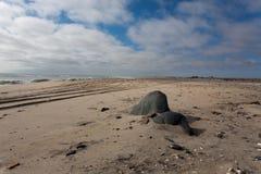 Skeleton coast panorama Royalty Free Stock Photography