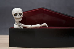 Skeleton in the coffin Stock Image