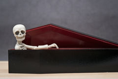 Skeleton in the coffin Royalty Free Stock Photo