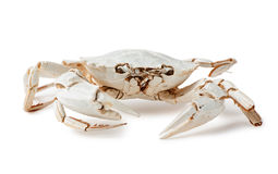 Skeleton of  crab Royalty Free Stock Images
