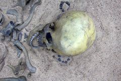 Skeleton (cranium) of young warrior. History of middle ages. Skeleton (skull, cranium) of young warrior from settlement of 10th-11th centuries royalty free stock photo