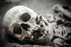 Skeleton Dead Body Head. Photo Royalty Free Stock Photography