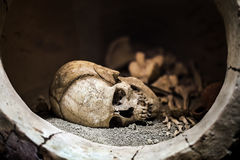 Skeleton Dead Body Head. Photo Stock Images