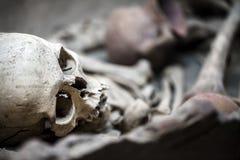 Skeleton Dead Body Head Stock Photos