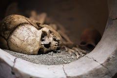 Skeleton Dead Body Head Stock Image