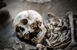 Skeleton Dead Body Head. Photo Royalty Free Stock Image