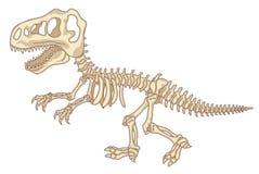 Skeleton of dinosaur stock images