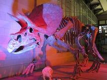 Skeleton of Dinosaur Royalty Free Stock Photography