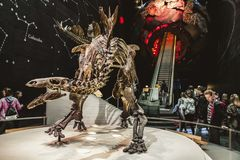 Skeleton of dinosaur and visitors royalty free stock images