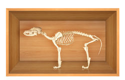 Skeleton of dog Stock Photo