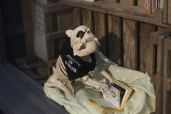 Skeleton of dog in shop-window. Extraordinary skeleton of dog in shop-window reads a book Royalty Free Stock Photos