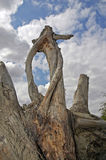 The skeleton of a dried-up tree on a background of the sky Stock Photo