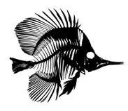 Skeleton of fish. Stock Photos