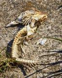 Skeleton of fish bones on the beach