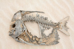 Skeleton of a fish in the desert Royalty Free Stock Photos