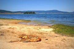 Skeleton of fish on lake shore Royalty Free Stock Photography