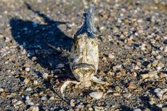 Skeleton Fish on the Sand Stock Photos